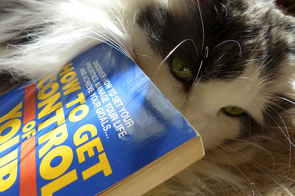 790 Nama Kucing Yang Sering Digunakan Oleh Orang Indonesia