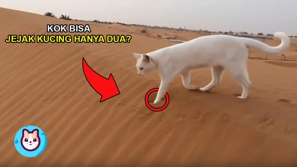 Ternyata Ini? Alasan Kenapa Jejak Kaki Kucing Hanya Ada Dua