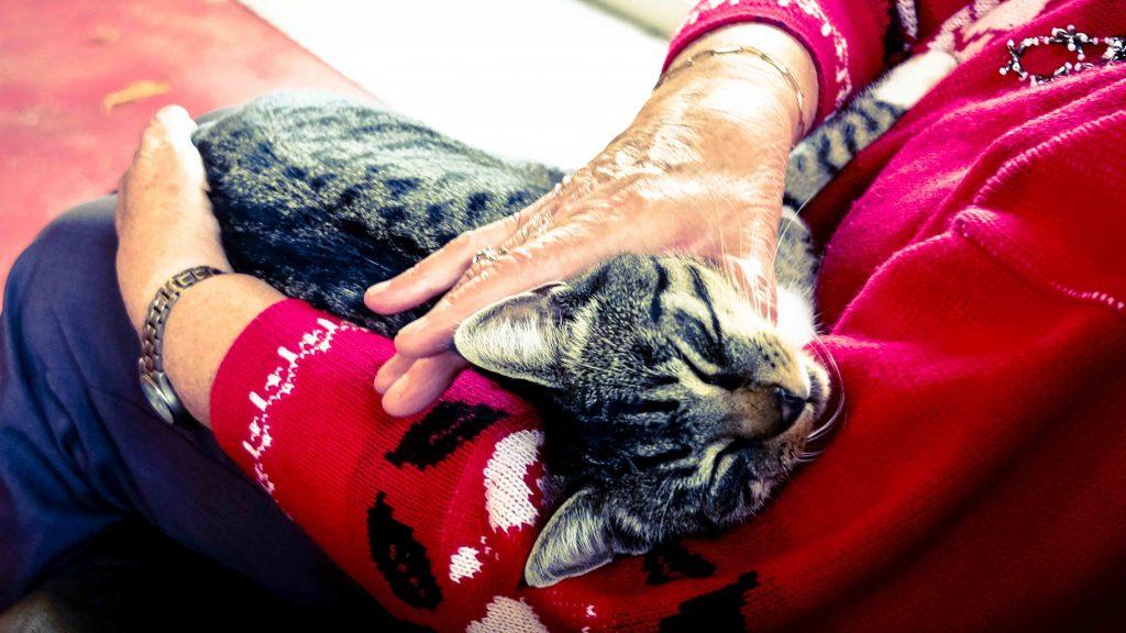 Beginilah 10 Tanda Kucing Sebelum Mati Yang Harus Kamu Tau